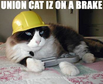 Union-cat-is-on-a-break