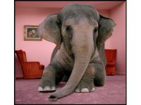 Elephant_in_room