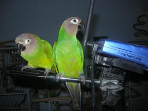 Feathercam