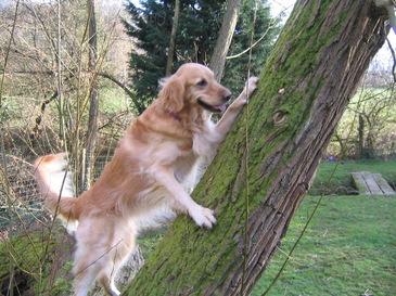 Dogclimb
